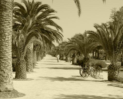 Sezione-San Benedetto